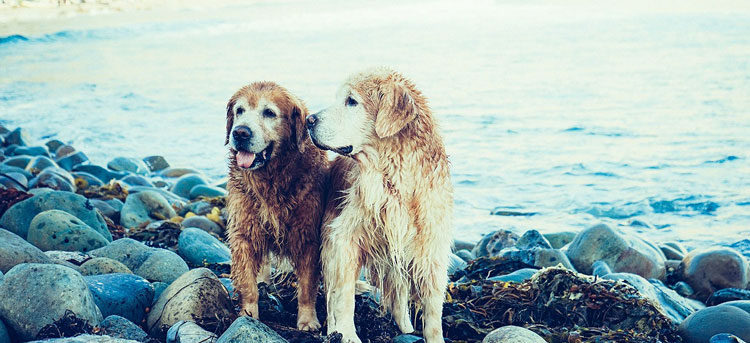 """On the """"Kicked Dog Syndrome"""" and Creating a Healthy Company Culture"""